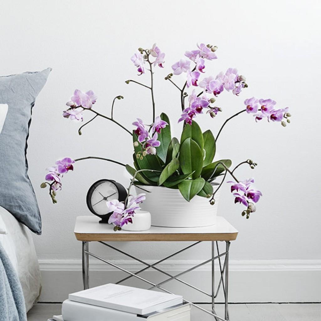 orkide-skotsel-square