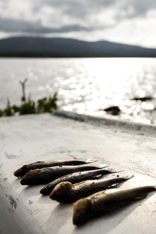 fisketur-16