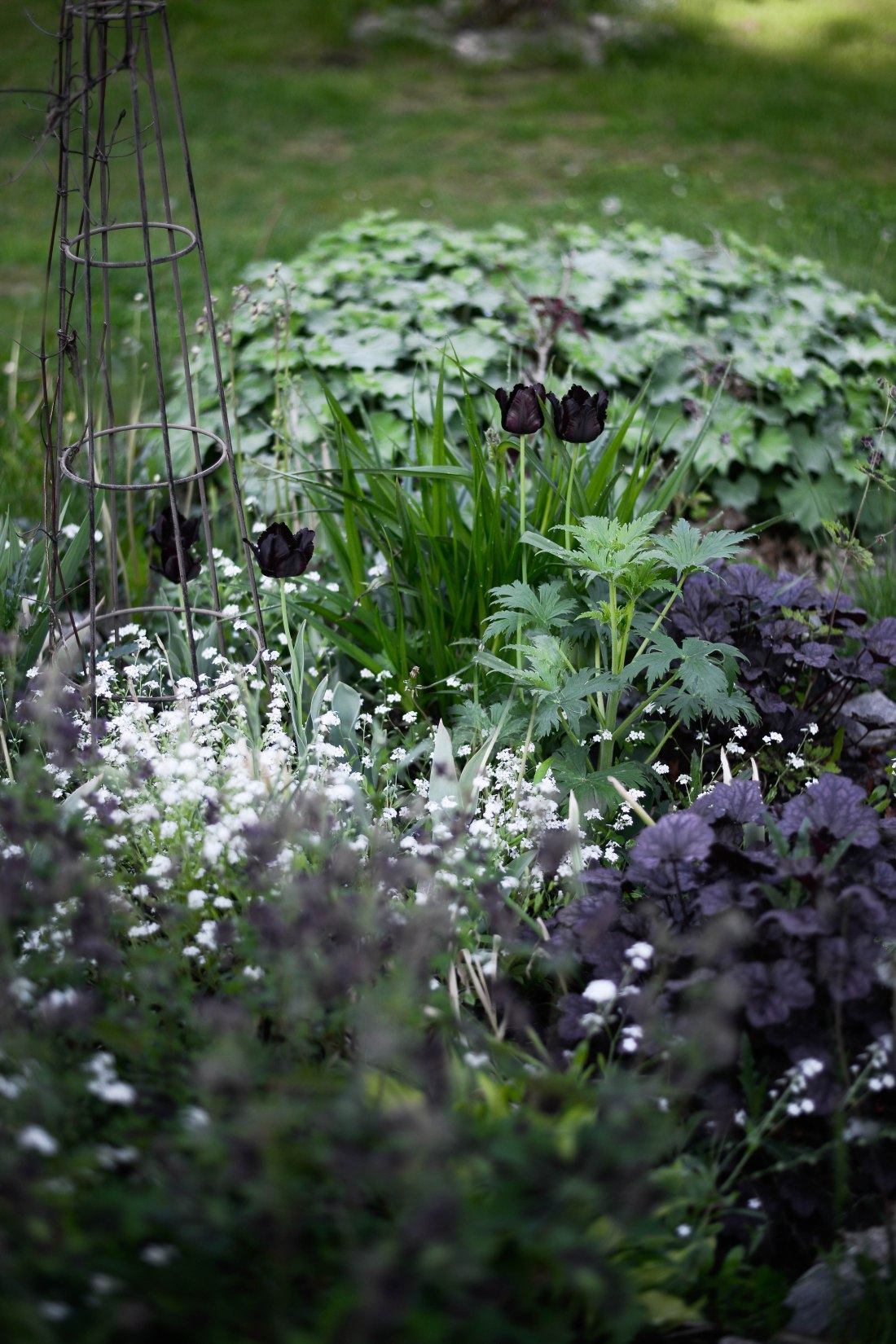 trädgård-2