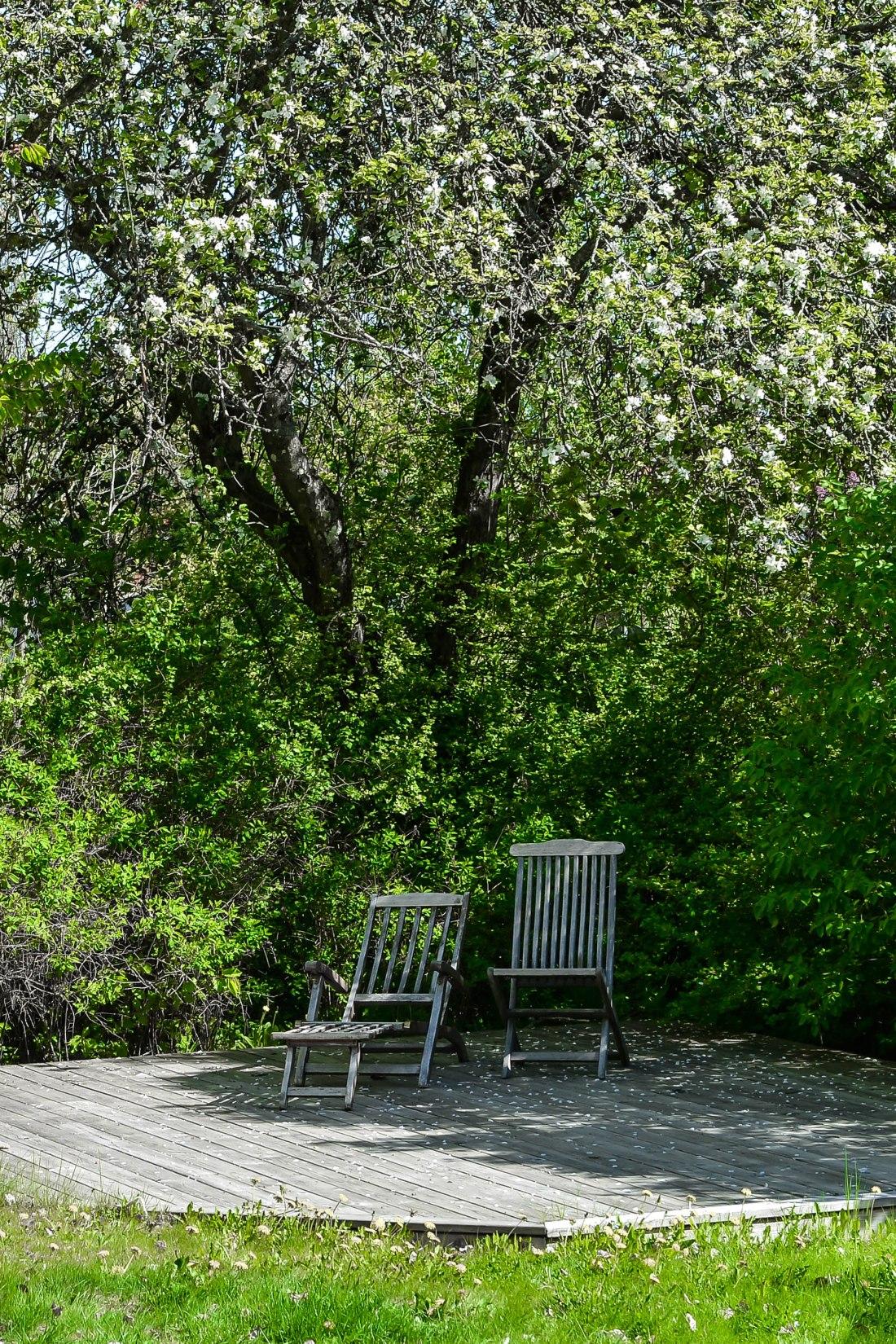 trädgården-2