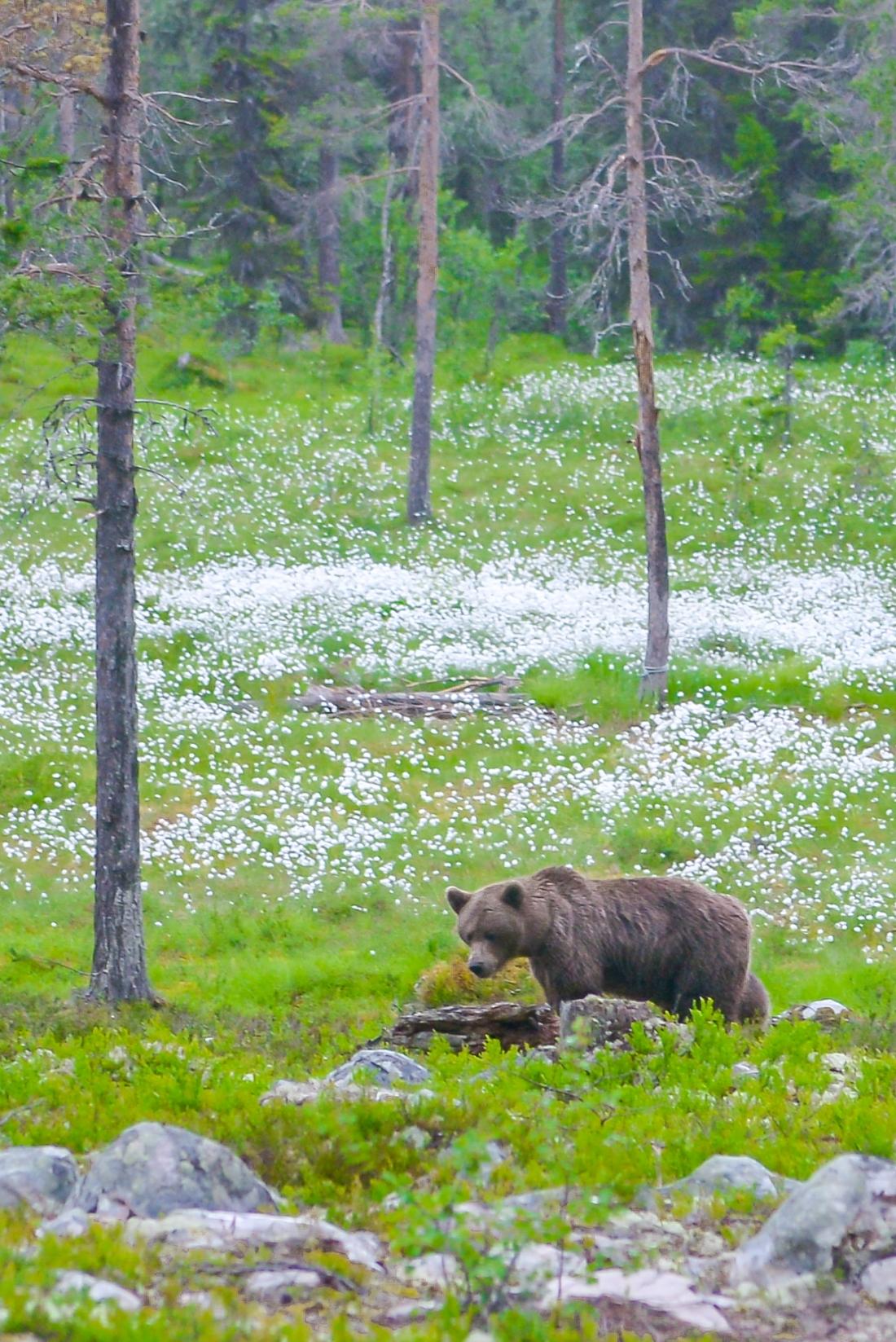 Bears Den-13