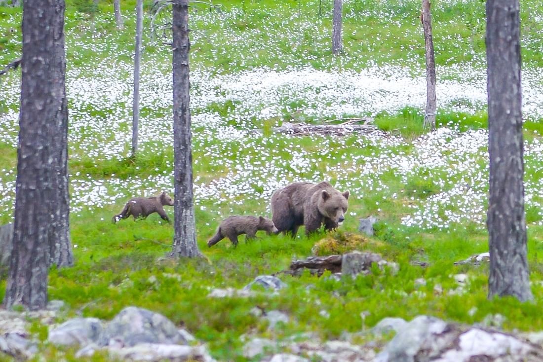 Bears Den-16