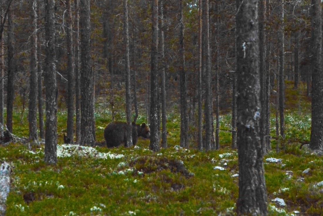 Bears Den - Emil-14