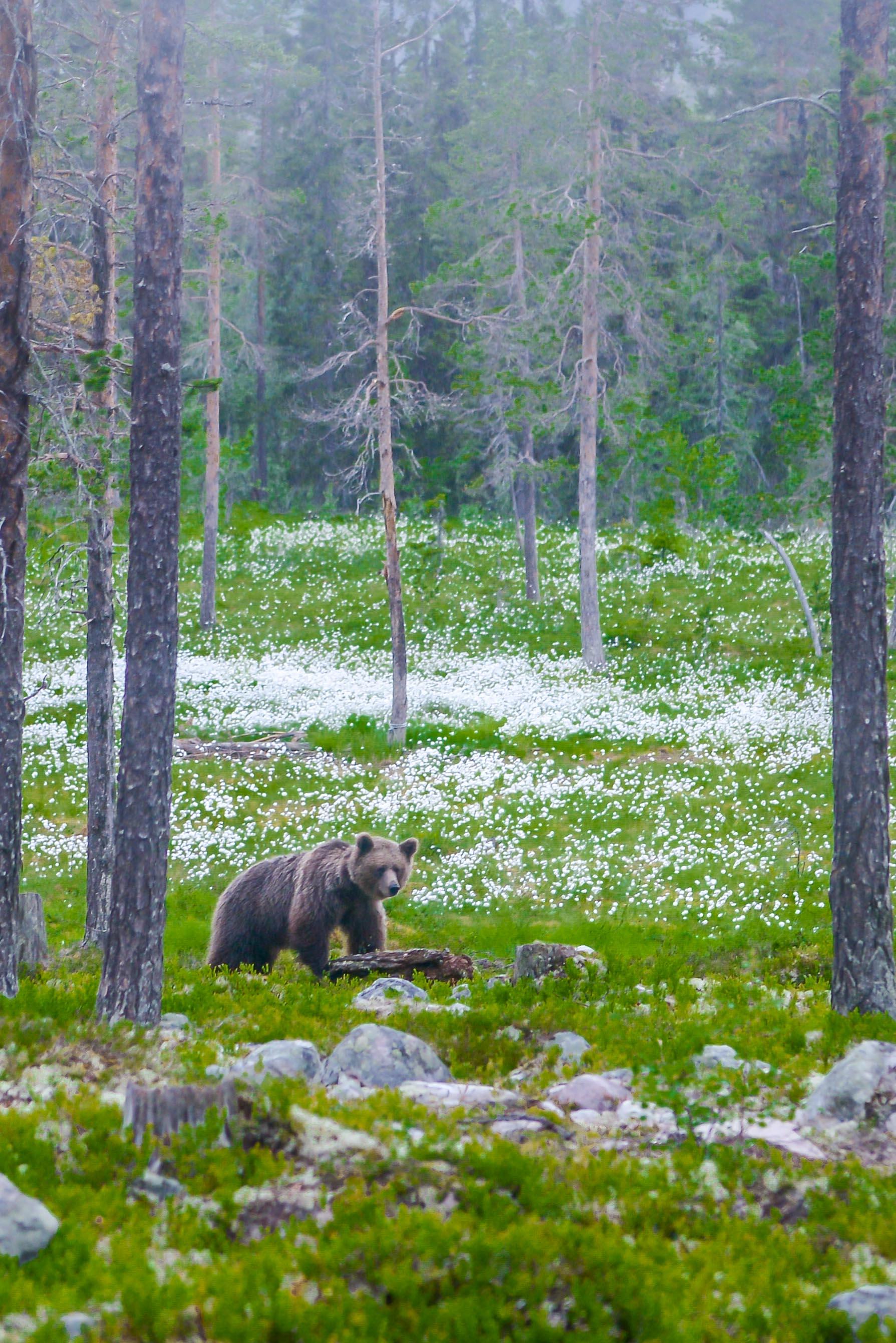 Bears Den - Emil-5