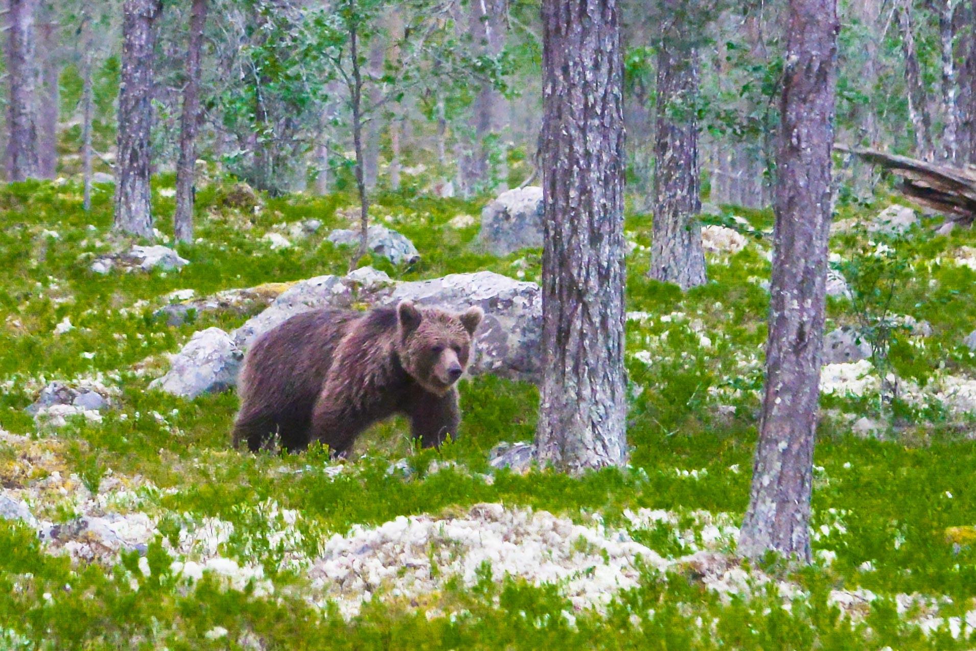 Bears Den - Emil-7